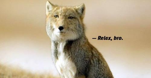 relax-bro